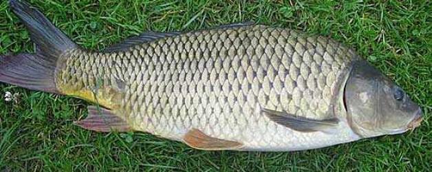 Legislators Change name of Hateful Racist fish